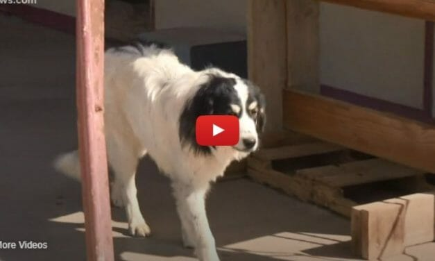 VIDEO: This Hotel Takes in Homeless Dogs While Guardians Get Back on Their Feet