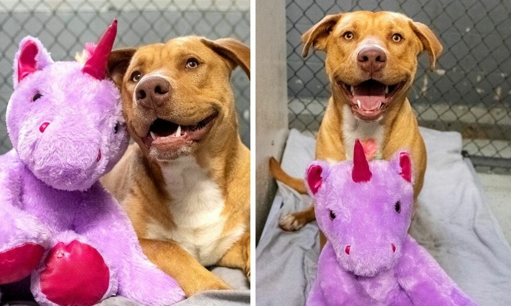 Stray Dog Caught 'Stealing' Stuffed Unicorn From Dollar General Gets A Forever Home — AND His Coveted Toy