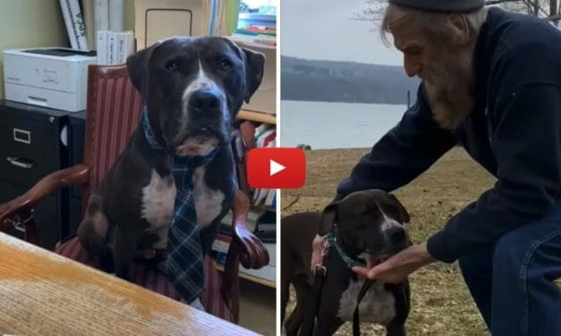 VIDEO: Dog Finds Forever Home After 444 Days At Shelter and an Unlikely Swap