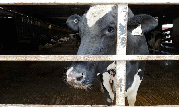 SIGN: Ban Live Animal Export Torture in Spain