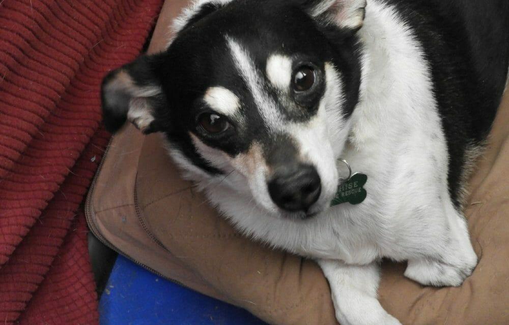 AWARDEE SPOTLIGHT: Cochise Canine Rescue Saves Senior and Special Needs Dogs From Arizona Kill Lists