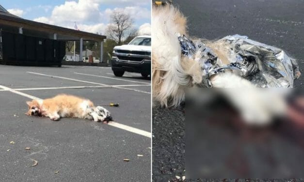 SIGN: Justice for Cat Bound With Duct Tape and Stabbed to Death With Screwdriver