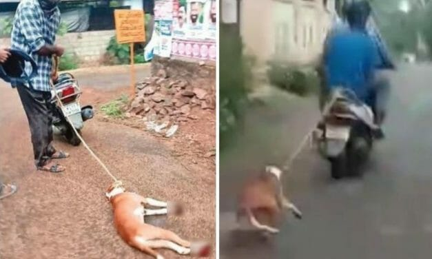 SIGN: Justice for Dog Tied to Motorbike, Painfully Dragged Down Dirt Road