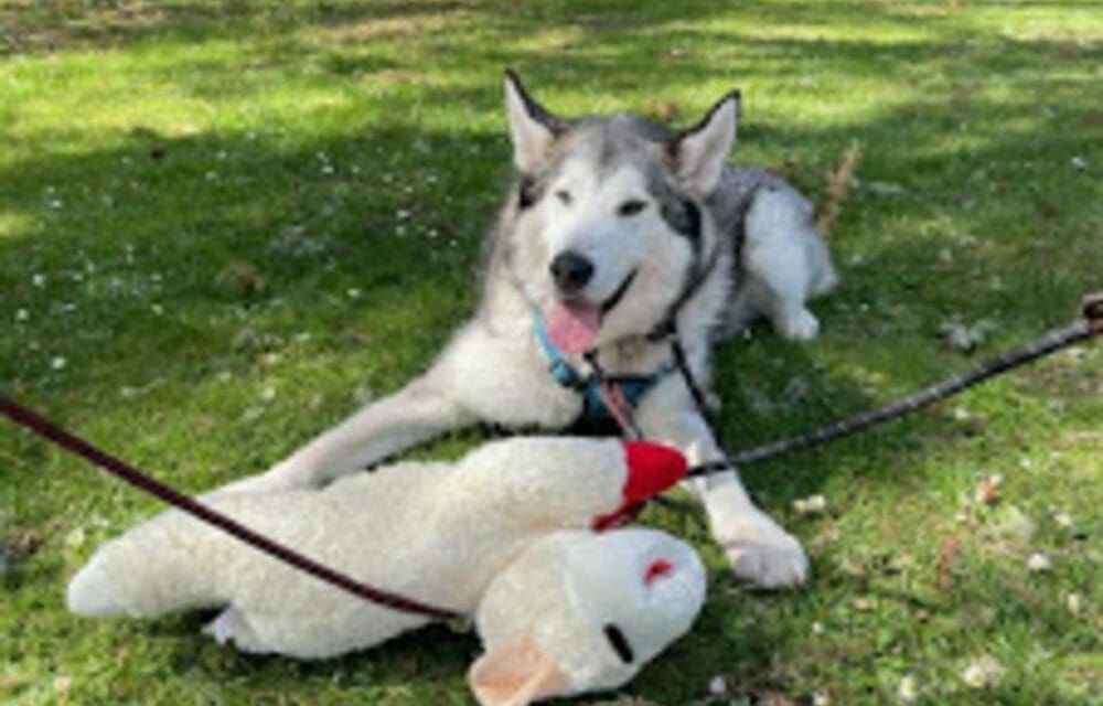 UPDATE: Lladk, Beloved Family Dog Slated For Death, Is Now FREE!