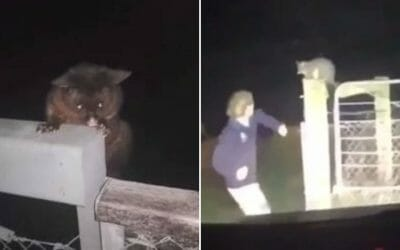 man punches possum