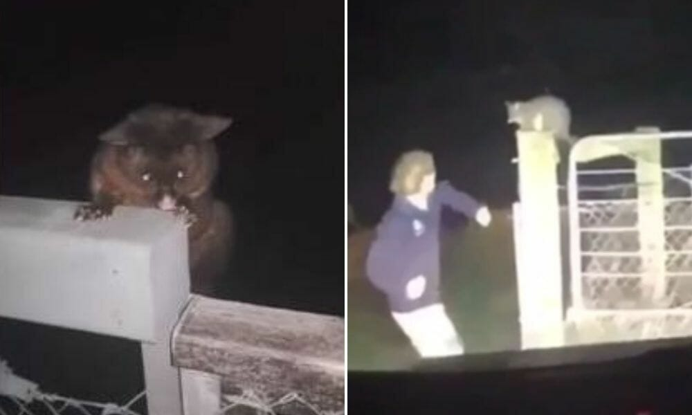 SIGN: Justice for Possum Brutally Punched in TikTok Video