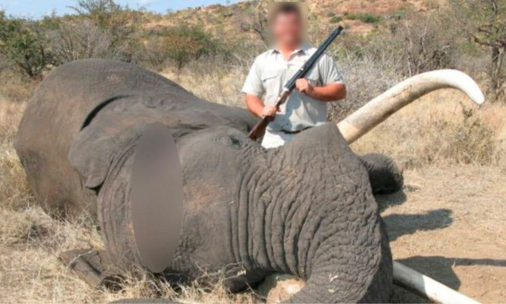 trophy hunter elephant dead