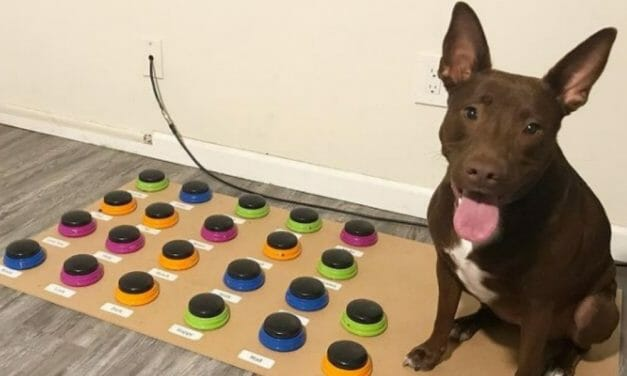 This Brilliant Pup Has Learned to Use Buttons to 'Speak In Sentences'