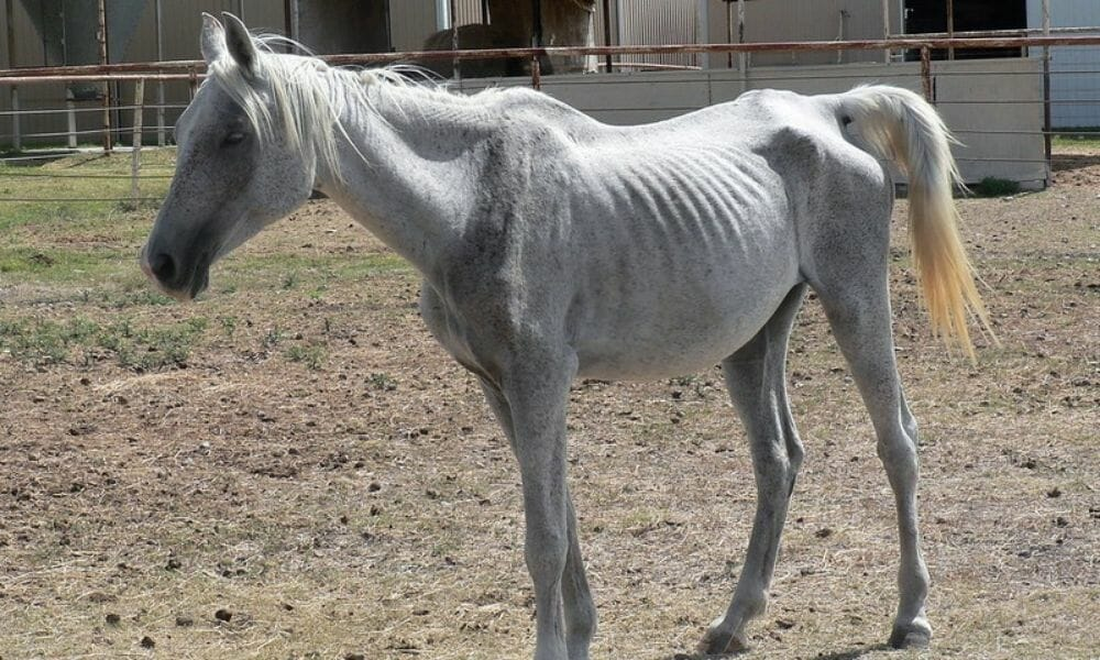 SIGN: Justice for Starved Horse With Throat Slit by Guardian
