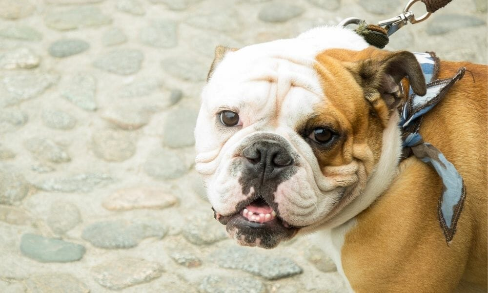 Spain Is Now Officially Classifying Pets as 'Living Beings' Instead of Objects
