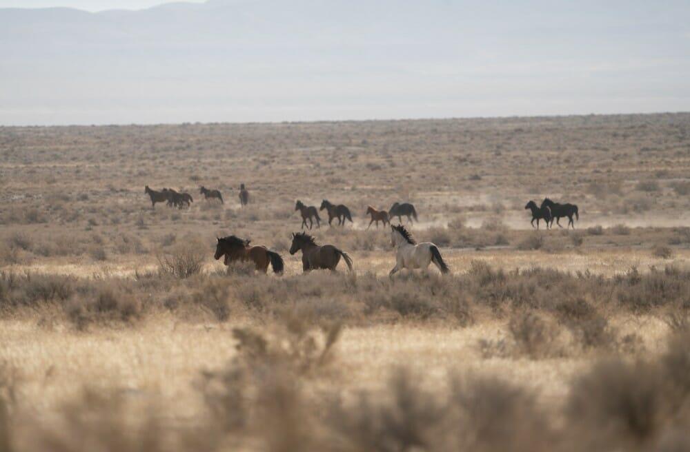 Utah Confusion Herd Management Area