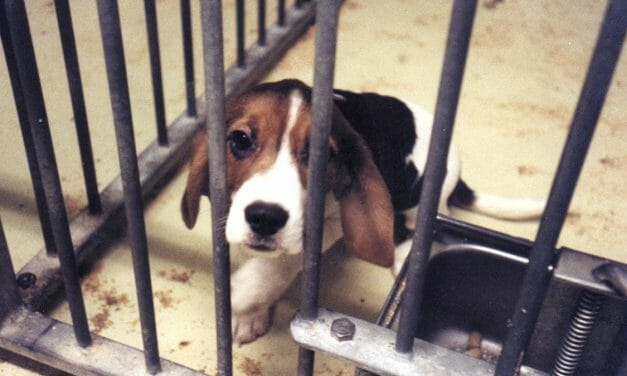 Saturday's 'World Day for Laboratory Animals' Recognizes Brutal Deaths and Suffering of Millions Each Year