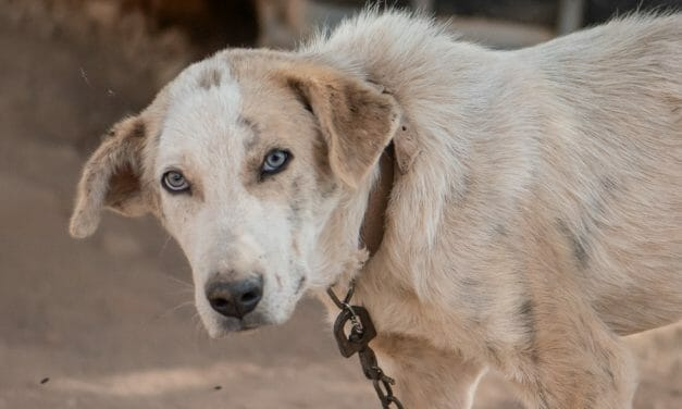 SIGN: Ban the Chain for Dogs in Texas