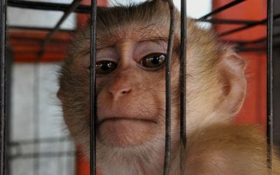 sad monkey in cage