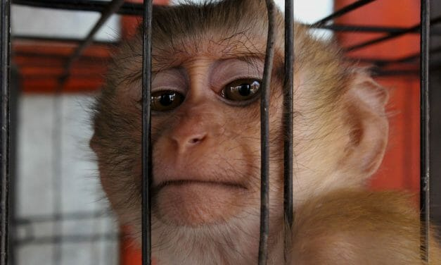 """Canada Promises to Shift Away From Cruel """"Toxicity"""" Animal Testing"""