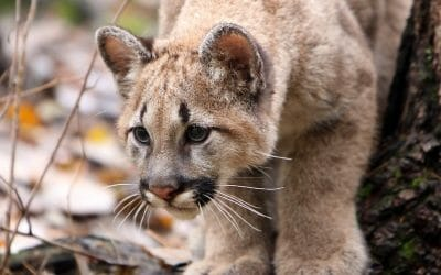 SIGN: Pass New Bill to Stop America's Endangered Animals from Going Extinct