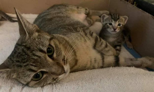 AWARDEE SPOTLIGHT: Angelico Cat Rescue Saves 'All Nine Lives' and Pairs Senior Cats With Senior People