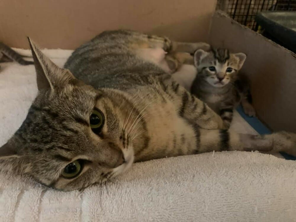 Angelico Cat Rescue