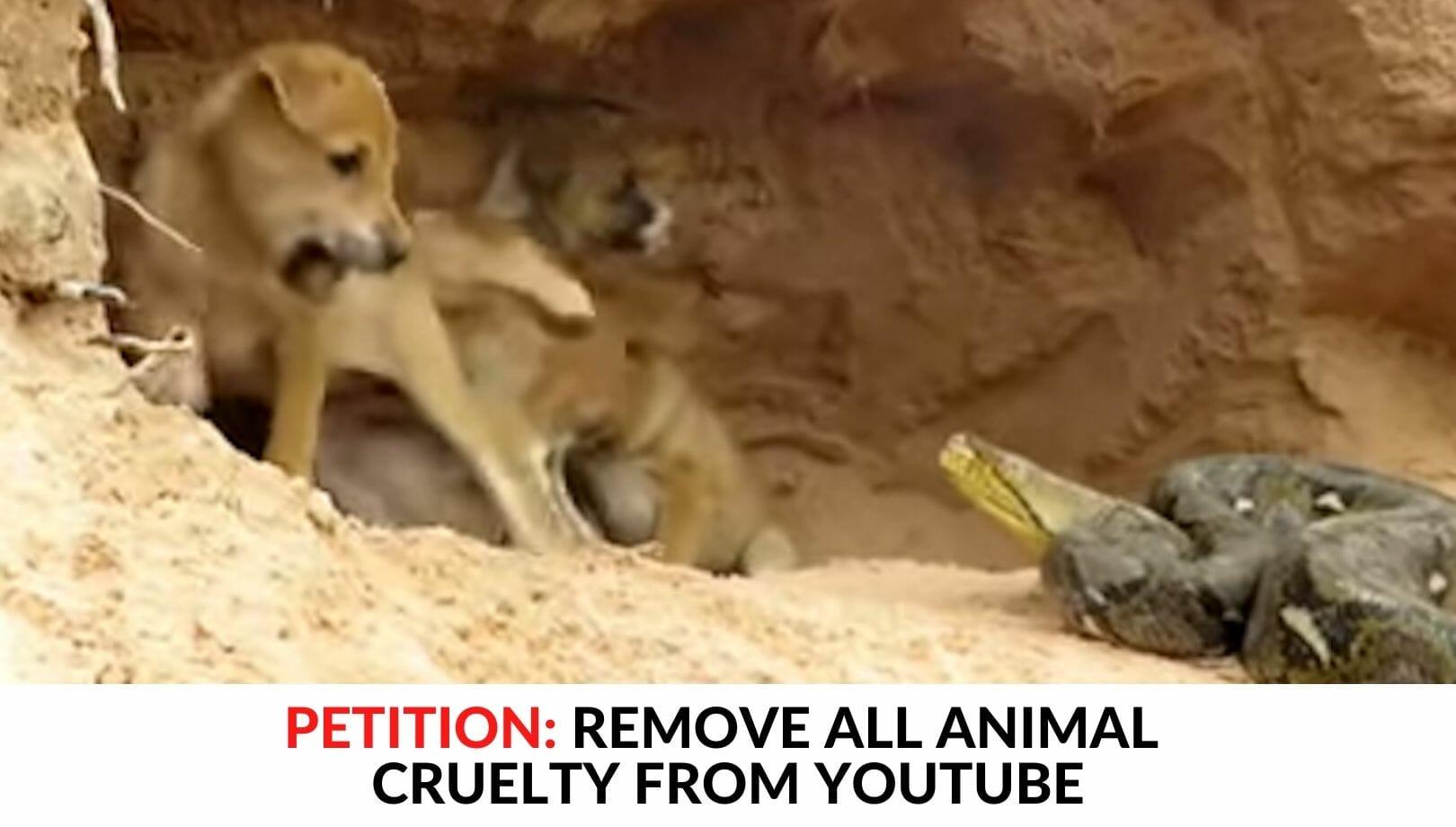 YOUTUBE ANIMAL CRUELTY