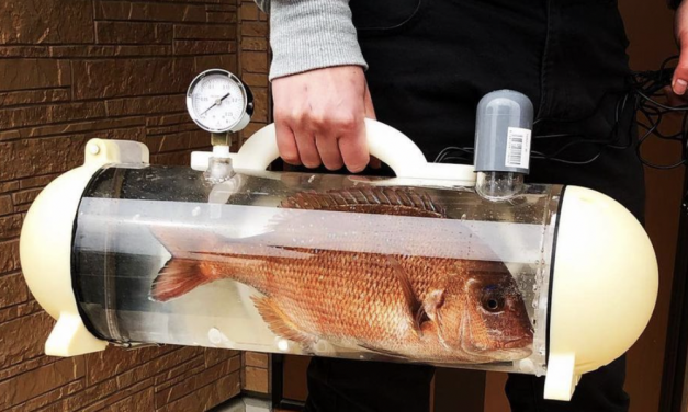 SIGN: End Plan for Fish Carrier to 'Take Dinner Home Alive'