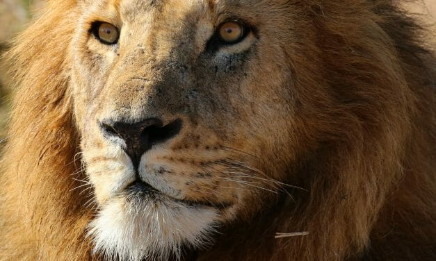 'The New Big 5' Project Promotes Shooting Animals With Cameras, Not Guns
