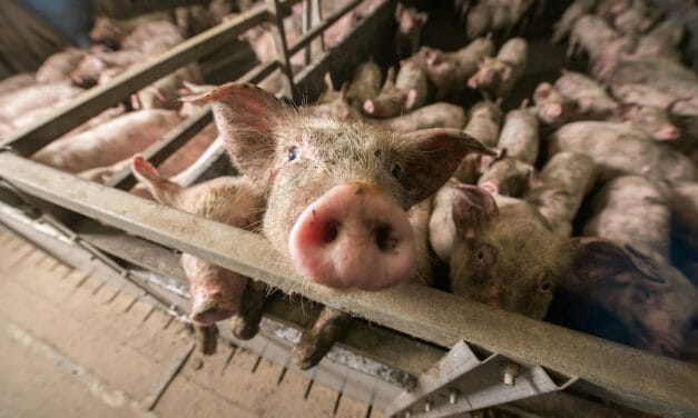 Air Pollution From Meat Production Kills More Than 16,000 Americans Each Year, Study Finds