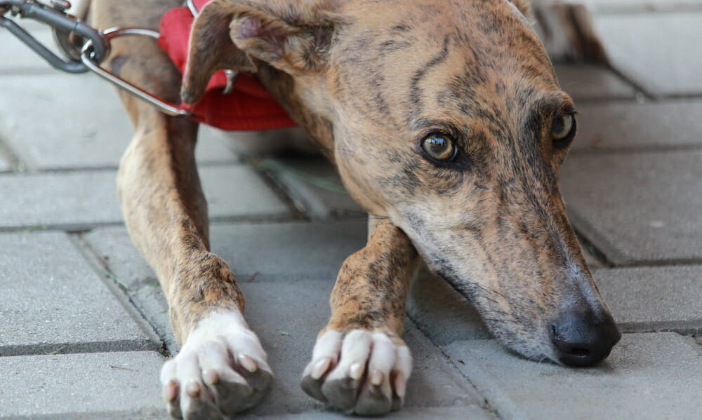 SIGN: Justice for Dog Shot in the Eye and Barbecued Over A Fire