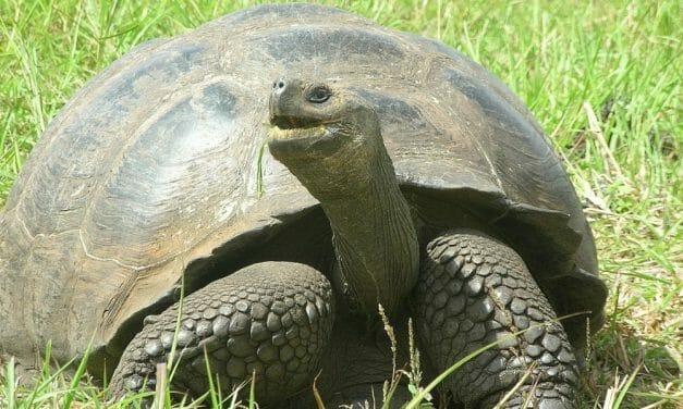 Hollywood Superstar and Activist Leonardo DiCaprio Gives $43 Million to Save Galápagos Island Wildlife