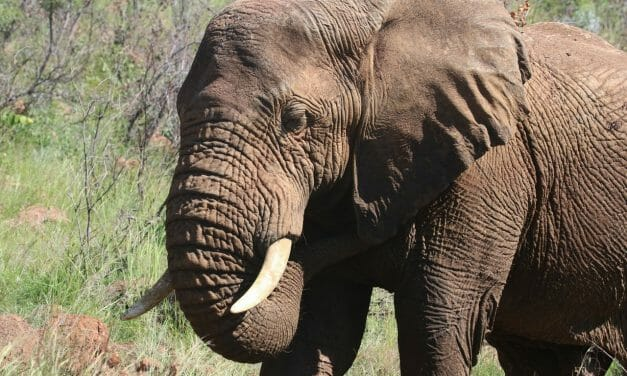 $2 Billion of Ivory Legally Traded in the US in Past Decade, New Report Says