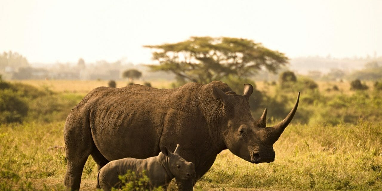 Kenya's First-Ever Wildlife Census Will Help Save Elephants, Rhinos, and Lions