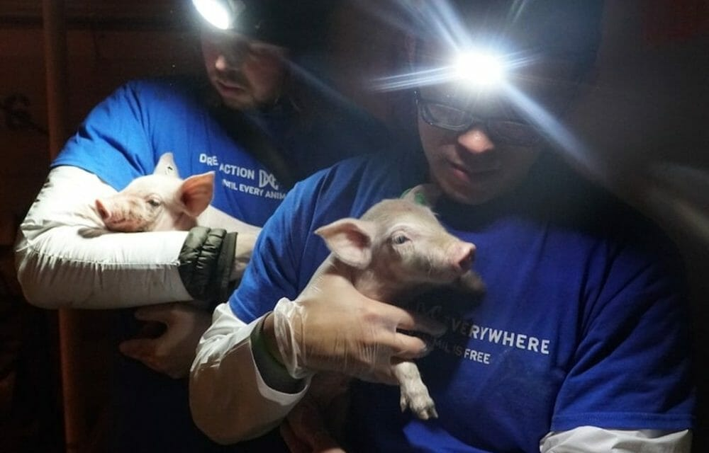 Rescuing Sick and Dying Animals From Factory Farms Is the 'Right Thing To Do' For Activist Wayne Hsiung