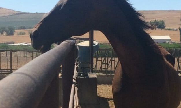 SIGN: Justice for Senior Horse Fed Deadly Chemicals Just Before Rescuers Arrived