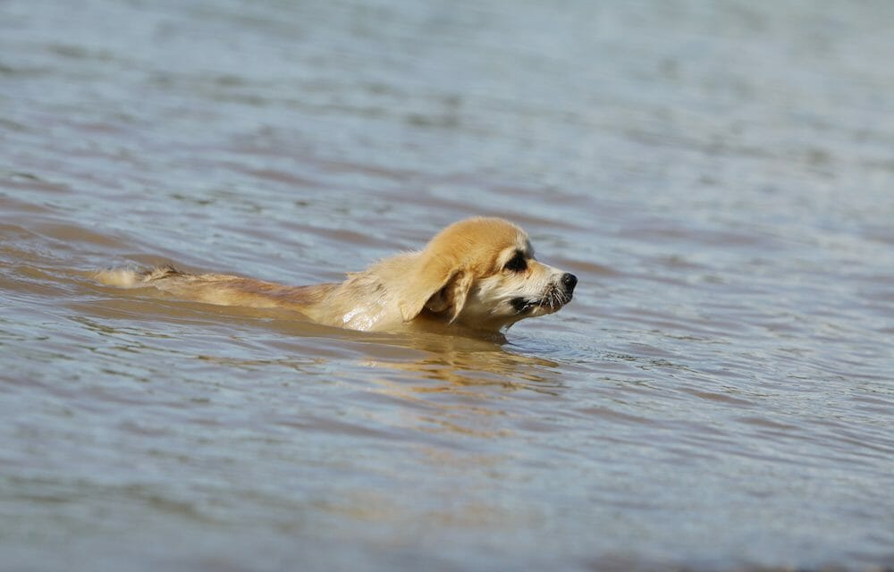 SIGN: Justice for Dog Tied to Cinder Block and Thrown in River