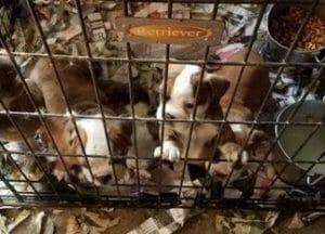 PA Puppy Mill