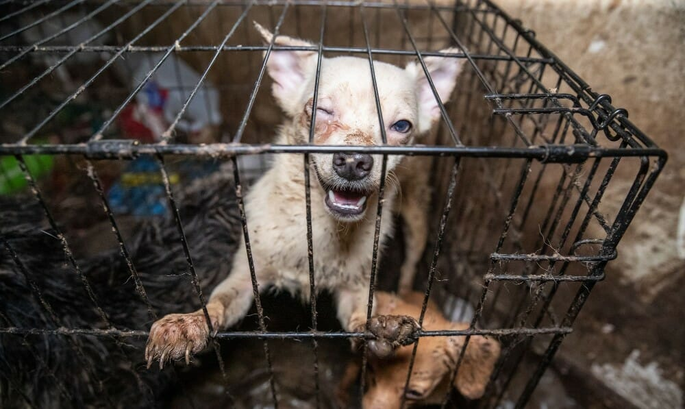 44 Dogs Rescued From Repeat Animal Abuser's 'House of Horrors' In Tennessee