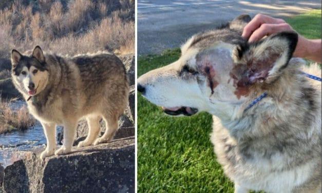 Beloved Idaho Dog Shot Twice After Camper Mistook Her For A Wolf