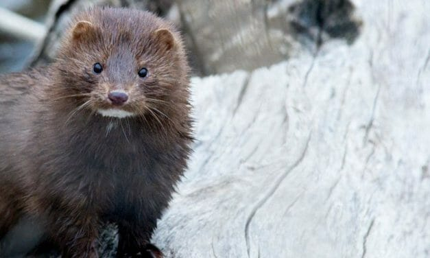 Israel Becomes First Country to Ban Fur Sales