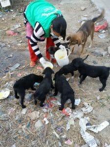 Voice of Animal-Nepal