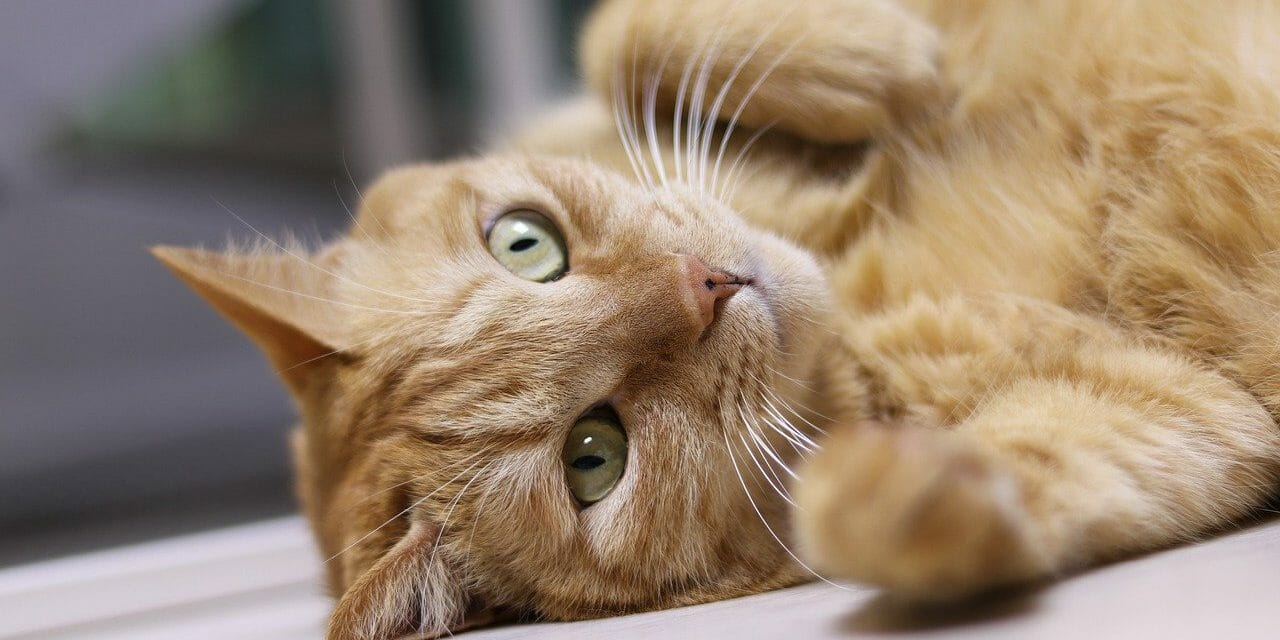SIGN: Justice for Cat Strangled With Zip-Tie and Stabbed in the Neck