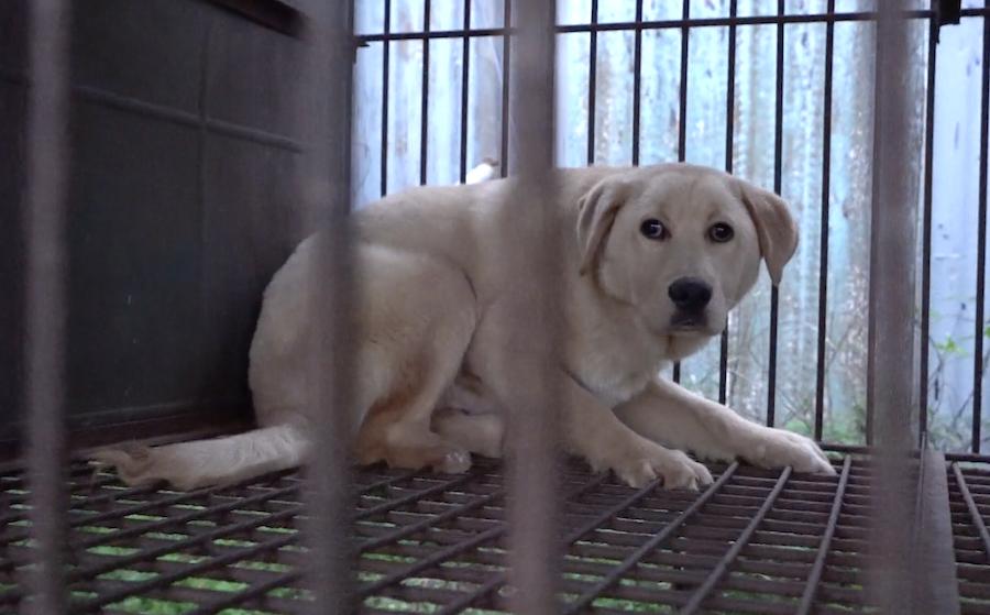 SIGN: Shut Down Cruel, Illegal Dog Meat Auction in Icheon, S. Korea