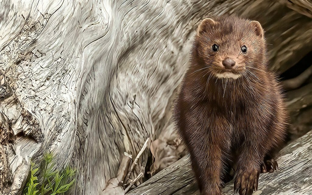 UPDATE: Neiman Marcus Commits to Going Fur-Free by 2023
