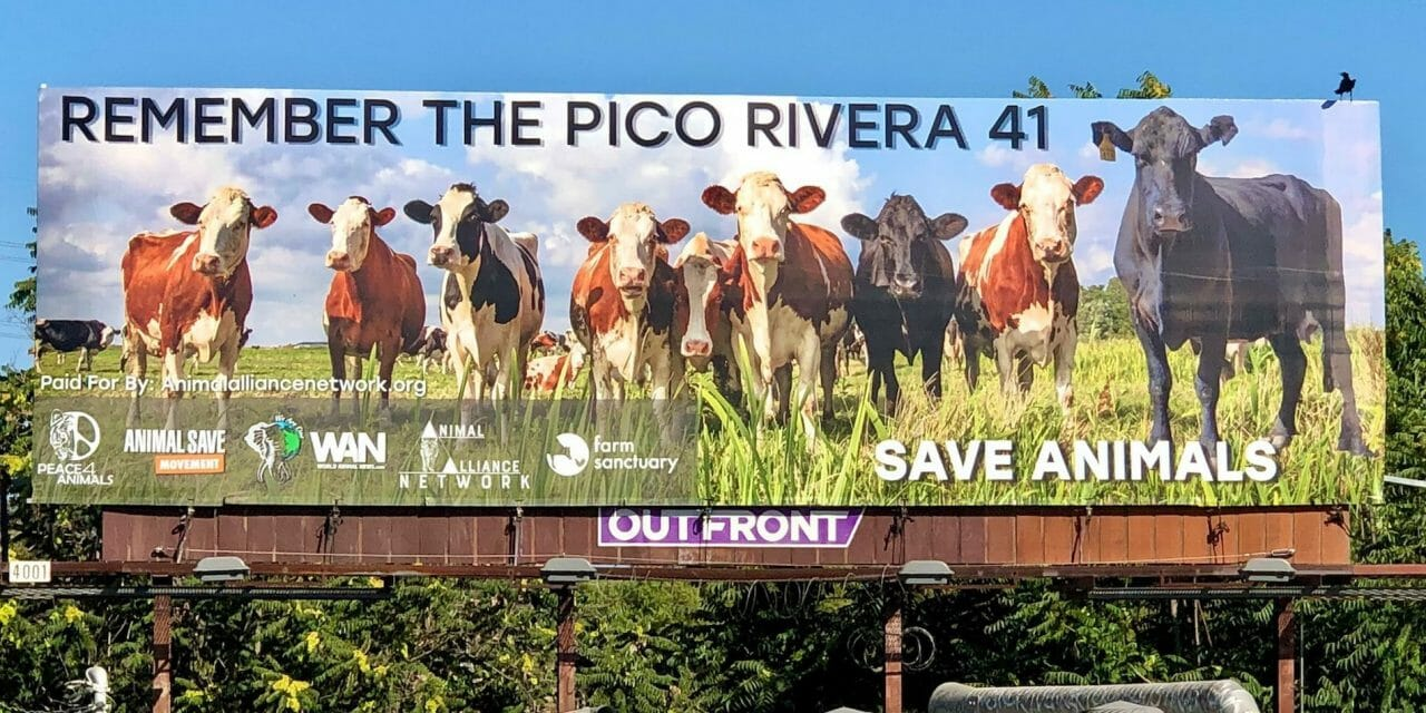 New LA Billboard Remembers 41 Cows Who Escaped Slaughterhouse, Encourages Plant-Based Lifestyle