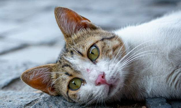 SIGN: Justice For Kittens Shot and Burned To Death By Serial Cat Killer