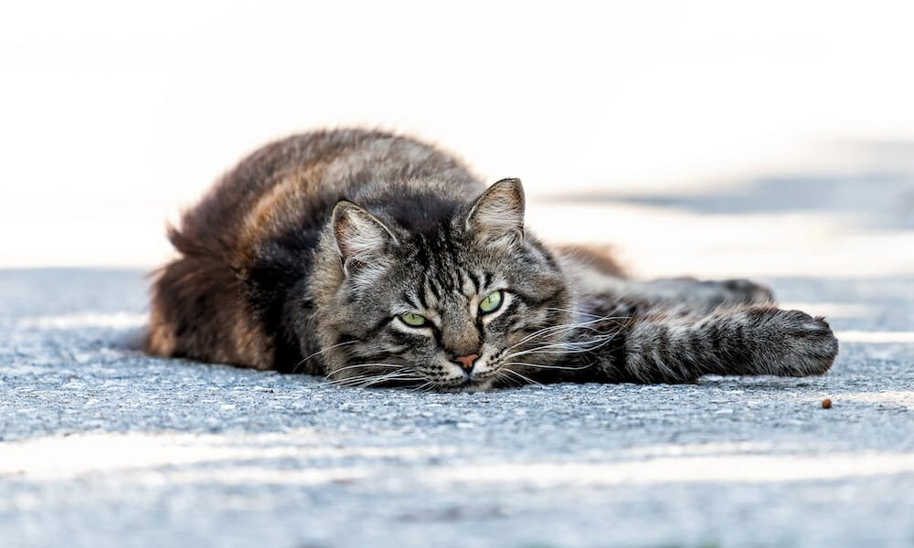 SIGN: Justice for Cat Shot Dead With Bow and Arrow