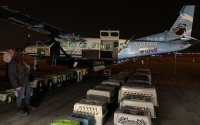 More Than 300 Dogs and Cats to be Flown Out of Crowded Texas Shelters in Massive Rescue Effort