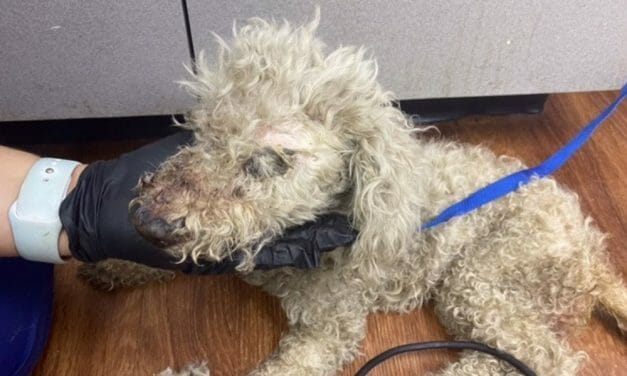SIGN: Justice for Poodle Found Hog-Tied with Mouth Taped Shut, Stuffed in Plastic Bag