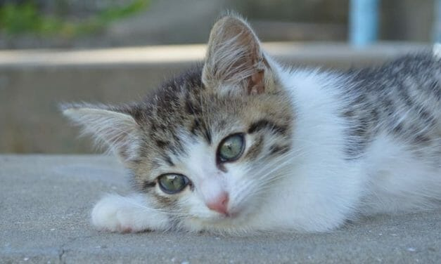 SIGN: Justice for Kitten Shot With Rifle, Paralyzed and Left to Die