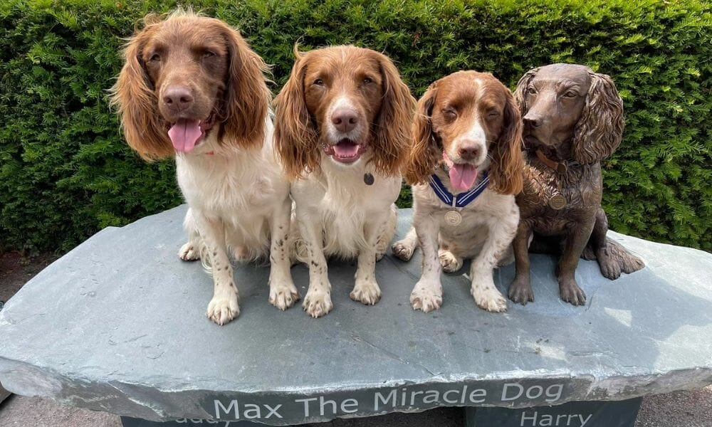 Max the Therapy Dog Immortalized With Bronze Statue For His Work During the Pandemic