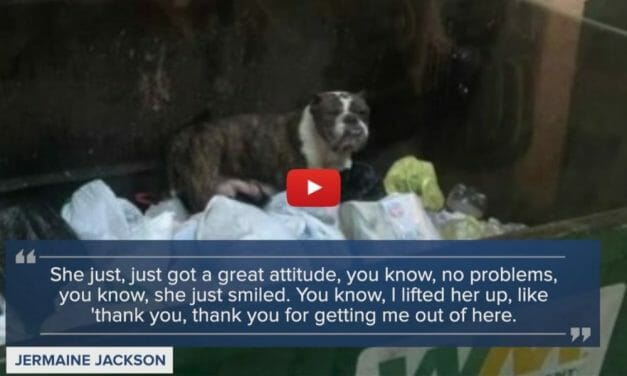 VIDEO: Friendly Dog Found in Dumpster on a Rainy Day Saved by Garbage Truck Driver