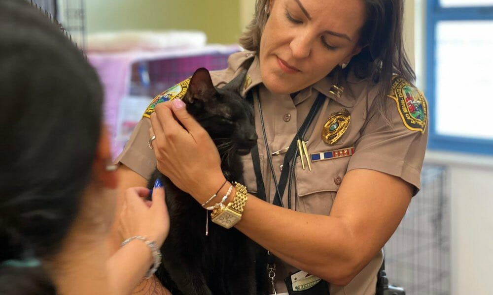 Binx the Cat Survives Surfside Condo Collapse, Reunites With Family